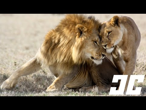 10 Bizarre Animal Mating Rituals