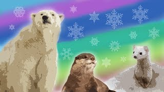10 Arctic Animals || Animals for Kids  || Science for Kids