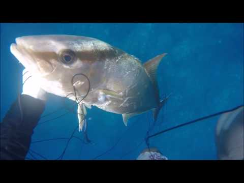 HAWAII SPEARFISHING The breath taking moments Anthonys Edition ep1