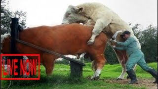 Intelligent Technology Smart Farming Automatic Cow Milking Machine, Feeding, Cleaning, Washing #ARJ