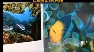 A book with nice pictures of variety of Fishes of Persian Gulf