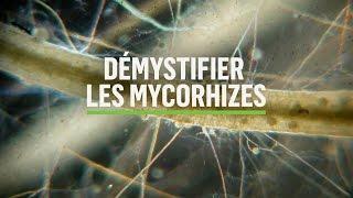 Mycorhizes 101: Comment se produit la symbiose ?