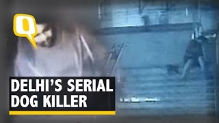 Caught on Camera: Man Brutally Stabs Stray Dogs to Death