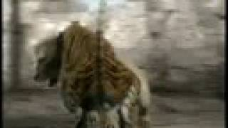 Animal Face-Off: Lion vs. Tiger
