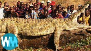 Top 10 Most Terrifyingly COLOSSAL Animals of All Time