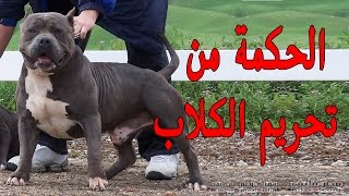 مفاجئه العلم يكشف لماذا حرم الاسلام تربية الكلاب في المنزل؟