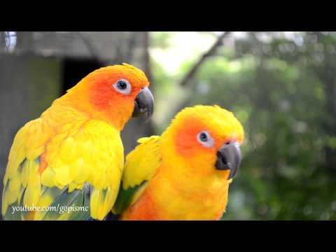 Xxx Mp4 Birds Up Close And Beautiful 3gp Sex