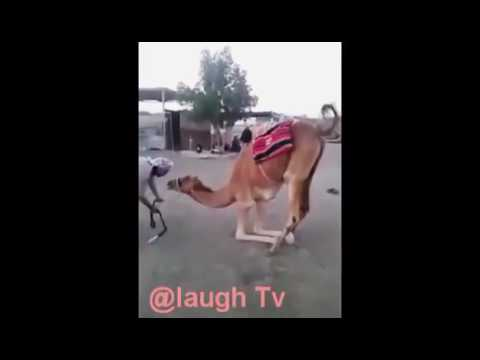 Xxx Mp4 TRENDING Indian Funny Sex Viral Videos 2017 Try Not To Laugh India 8 3gp Sex