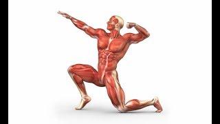 مقطع يوضح كل عضلة بالجسم والتمرين الذي يقويها ويشدها