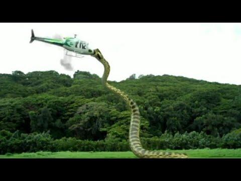 Xxx Mp4 Snake Attack On Helicopter Snake Fight Worlds Dangerous Snake 3gp Sex