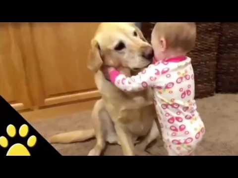 This is why we love Dogs 🐕. 🎵hotvocals