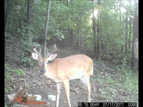 Trail Camera Photo's #2. Wildgame Innovations S1.3x