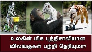 புத்திசாலித்தனத்திற்கு பேர்போன விலங்குகள் பற்றி தெரியுமா? | BioScope