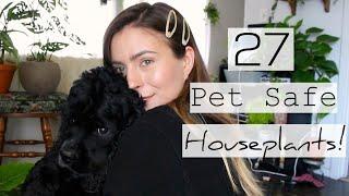 25 Non-Toxic to Pets Houseplants | Pet Friendly Indoor Plants!