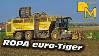 MASSIVE SUGAR BEET HARVESTER ROPA EURO TIGER IN ACTION # HARVEST TIME