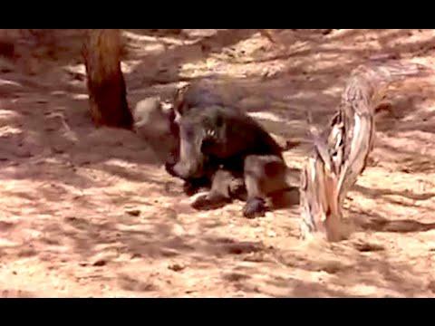 Ozzy Man Reviews: Drunk Animals