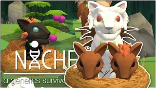 Birth of Twins in the Snow-Touched Nest!! • Niche: Snowy Mountain Update! - Episode #3