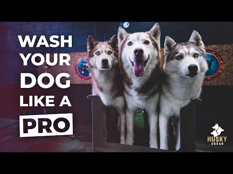 How To Bathe Your Siberian Husky BEST TOOLS