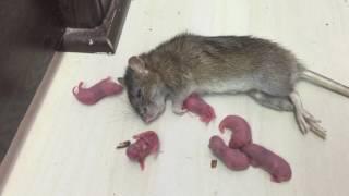 غريب عجيب  مواطن بحريني يعيش مع الفئران لن تصدق  اغرب