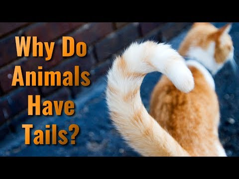 Xxx Mp4 Why Do Animals Have Tails 3gp Sex