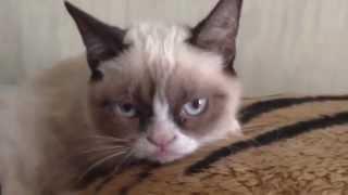 Do not disturb Grumpy Cat!
