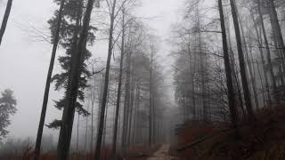Relaxing Virtual Drive Through Foggy Forest / 1 Hour Rain Sound on Car Roof