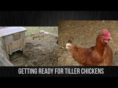 GETTING READY FOR TILLER CHICKENS!!