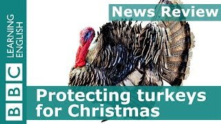 BBC News Review: Protecting turkeys for Christmas