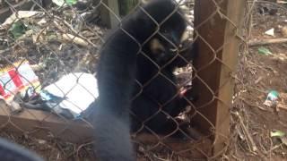 Caged monkey :(