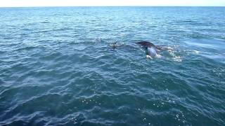 Whale watching in Hermanus, South Africa - 01