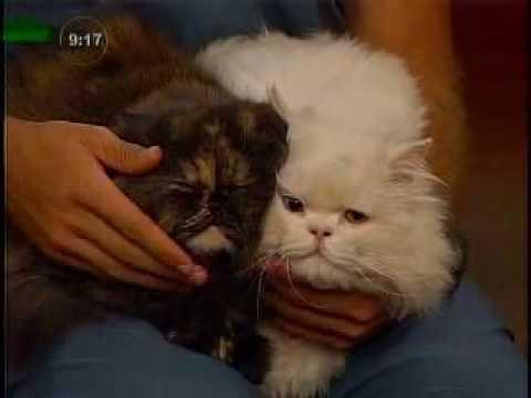 Los 6 errores en la crianza de los gatos