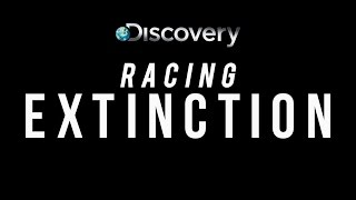 Racing Extinction Trailer - Worldwide Premiere on Discovery Dec 2
