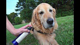 How to Naturally Remove Fleas and Ticks from your Dog