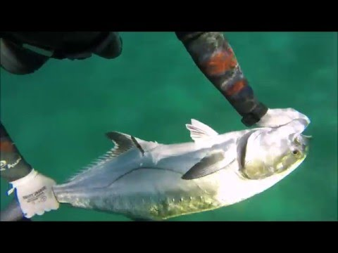 Spearfishing the Eastern Cape of Southern Africa: Highlights of 2015