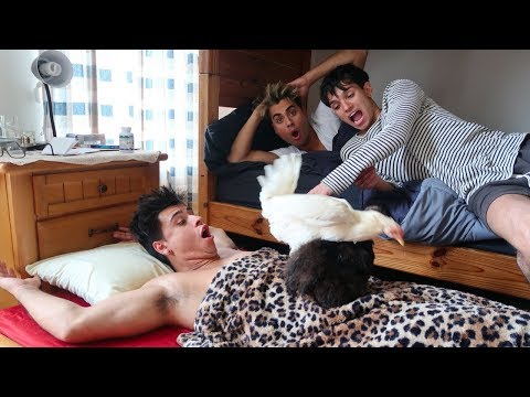 LUCAS AND MARCUS GOT US BACK