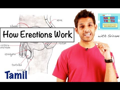 How Erections Work - Tamil