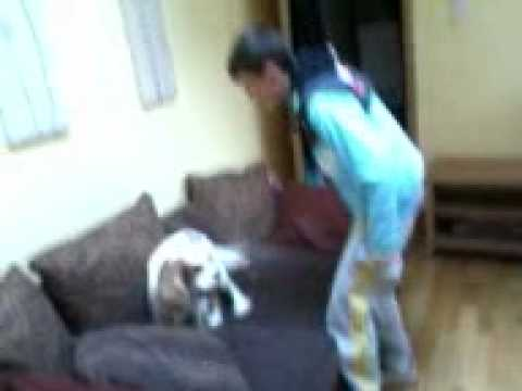 andre fucking the dog :L