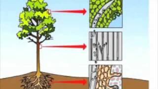 Transportation of Water in Plants