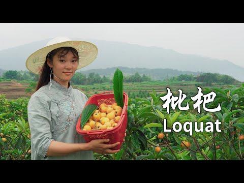 五月又到了吃枇杷的季节,枇杷全身� 是宝,是� �一定不要错过的美味 Food made by loquat