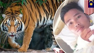 Tiger attacks man while he goes to the bathroom, dogs save his life - TomoNews