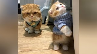 CATS take it to ANOTHER LAUGHING LEVER, will you be ABLE TO TAKE IT? - Super FUNNY CATS