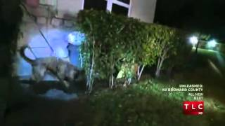 UNLEASHED: K9 BROWARD COUNTY (CAR JACKING)