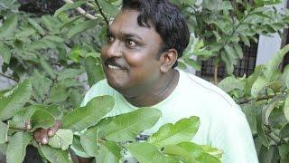 Adi Kapyare Kootamani New Malayalam Movie Aju Varghese