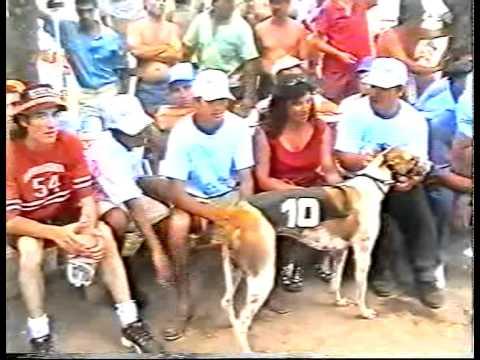 ADRIANO campeon nacional del galgo 2002 SOYGALGUERO.FOROARGENTINA.NET