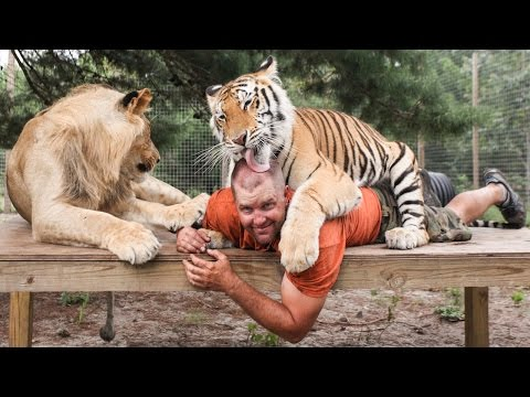 Xxx Mp4 Big Cat Enthusiast Owns Six Tigers And Two Lions 3gp Sex
