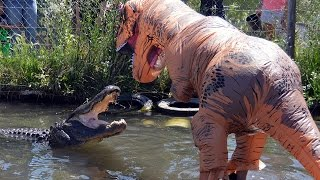 Man Dressed As T-Rex Teases 500LB Alligator