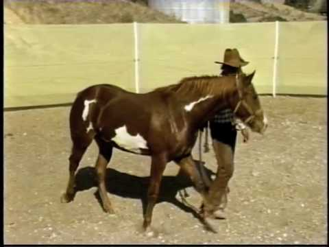 Xxx Mp4 Horse Whisperer And The Blind Lady 3gp Sex