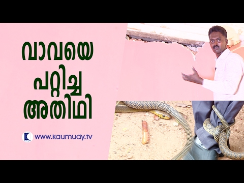 The snake that baffled Vava Suresh | Snake Master | Kaumudy TV