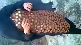 Pakistani Girl On Date Tuching her Body Parts