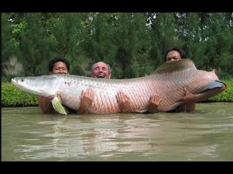 Allah Ke Qudrat Ka Karishma Part 56 || Undefined Snake Fish Found Underwater (MUST WATCH)
